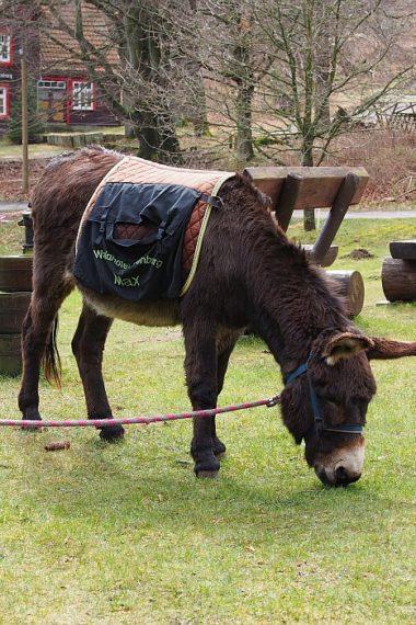 ein Esel auf der Wiese